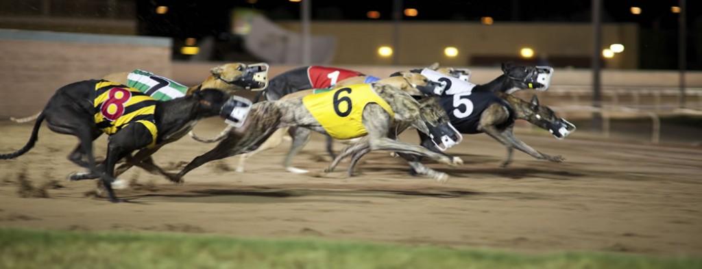 Texas Greyhound Associ...
